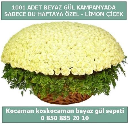 1001 adet beyaz gül sepeti özel kampanyada  Burdur çiçek gönderme sitemiz güvenlidir