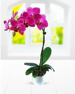 Tek dallı mor orkide  Burdur çiçek satışı