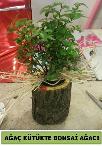 Doğal ağaç kütük içerisinde bonsai ağacı  Burdur çiçek gönderme sitemiz güvenlidir