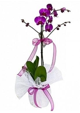 Tekli Mor Orkide  Burdur çiçek yolla