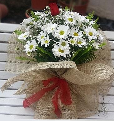 Papatya 1 adet kırmızı gül buketi  Burdur çiçekçiler