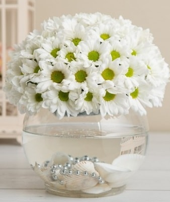 Fanusta beyaz Papatya  Burdur çiçek satışı