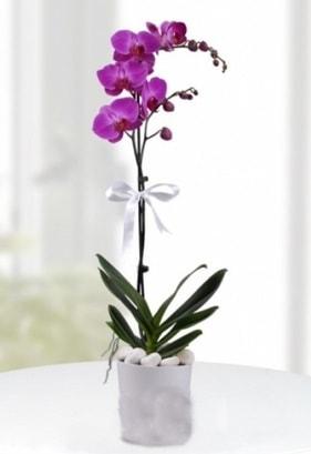 Tek dallı saksıda mor orkide çiçeği  Burdur çiçekçiler