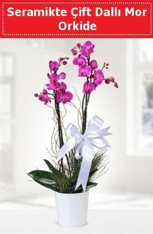 Seramikte Çift Dallı Mor Orkide  Burdur anneler günü çiçek yolla