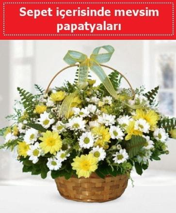 Sepet içerisinde mevsim papatyaları  Burdur ucuz çiçek gönder