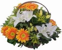Burdur online çiçekçi , çiçek siparişi  sepet modeli Gerbera kazablanka sepet