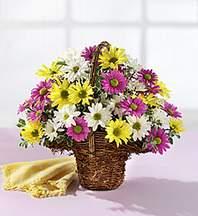 Burdur çiçekçiler  Mevsim çiçekleri sepeti